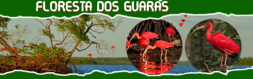 FLORESTA DOS GUARAS